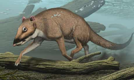 Indohyus - earliest known ancestor of the whale