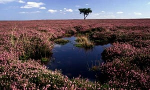 Peat bog in the North York Moors