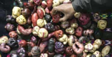 Potatoes in Peru