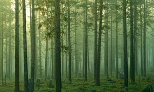 Forest managed for timber near Jokkmokk, Sweden