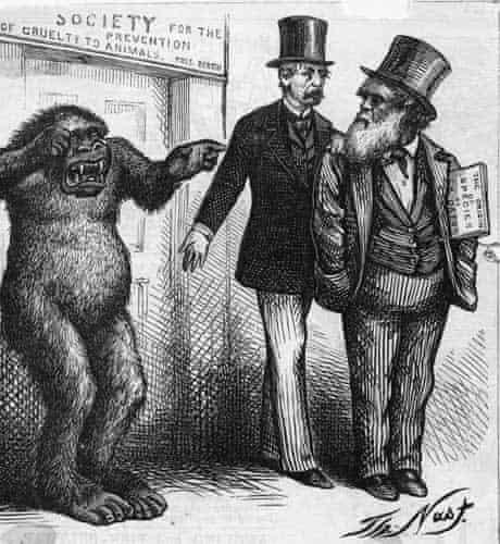 Darwin cartoon