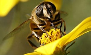 A bee sits on a flower and collects nectar