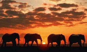 An elephant herd at Kruger National Park