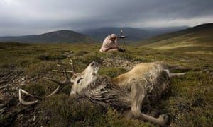 A stag in the Highlands