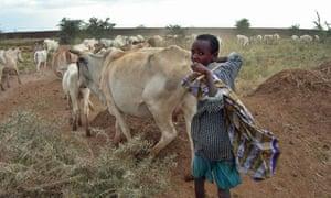 The Ogaden: a forgotten war draining a forgotten people