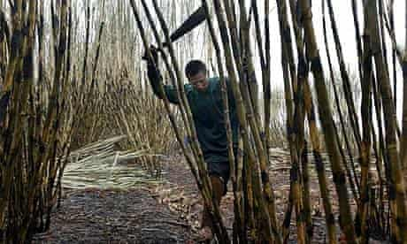 A worker cuts sugar cane for biofuel production in Brazil