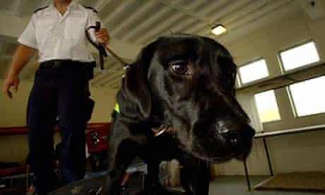 A police sniffer dog