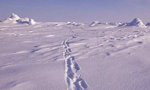 Arctic, North Pole