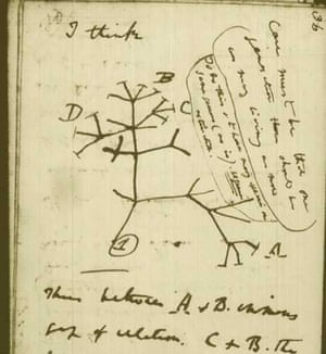 Darwin's sketch of the tree of life