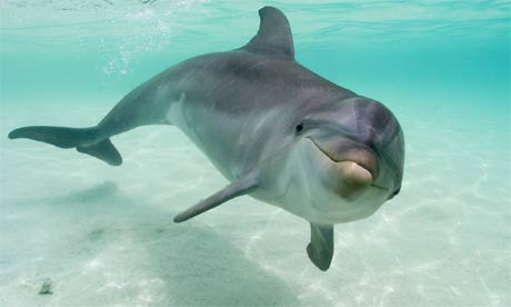 Dolphins offer humans a clue to treating diabetes