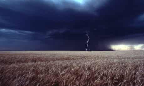 Lightning wheat field
