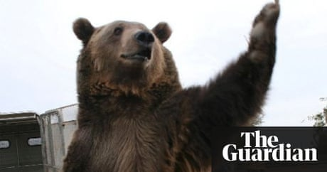 Movie bear kills trainer us news the guardian publicscrutiny Choice Image