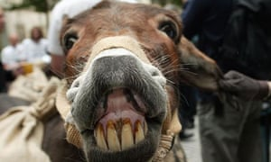 A donkey takes part in a protest outside the London Stock Exchange to highlight the plight of more than 25 million coffee farmers around the world