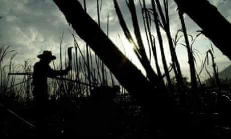 An El Salvadorean harvests sugar cane