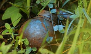 An unexploded US Blu 24 bomblet - which has come from a cluster bomb - in northern Laos