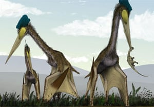 Artist's impression of giant dinosaurs called Quetzalcoatlus