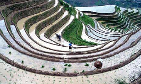 Farmers from Dazhai, acclaimed as a model village in the 1960s by Mao Zedong, work on the famous rice terraces which line the mountains of Guangxi in southern China