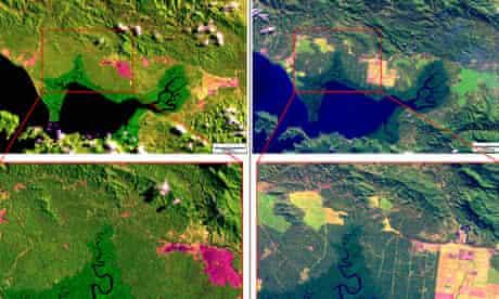 Papua New Guinea deforestation
