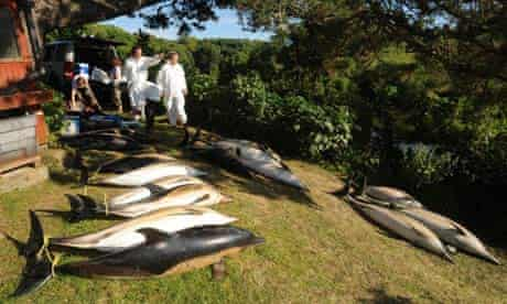 Dead dolphins undergo autopsies