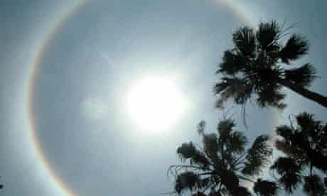 The sun shines high above a cluster of palms. Photograph: Andy Newman/AFP/Getty Images