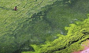 Algae China
