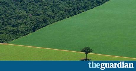 21st century problems deforestation