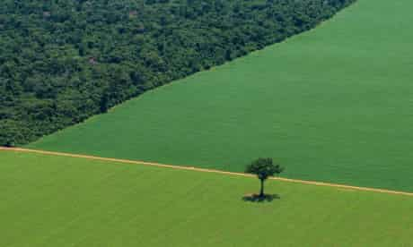 Forests in Brazil have been cut down to make way for crops such as soya