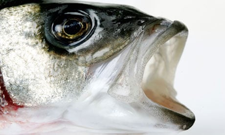 Pollack and bass on the menu as UK acquires taste for greener fish