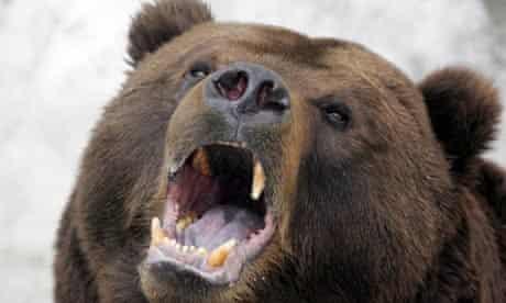 A Kamchatka brown bear