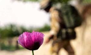 British soldier and heroin poppy