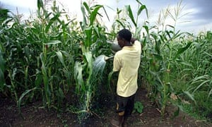 A farmer waters his crops in Malawi