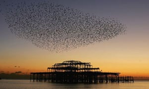 A flock of starlings gather over the derelict West Pier in Brighton