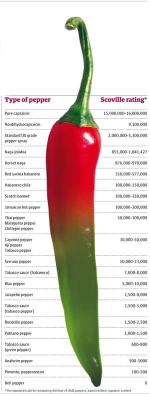 Guide to chillies