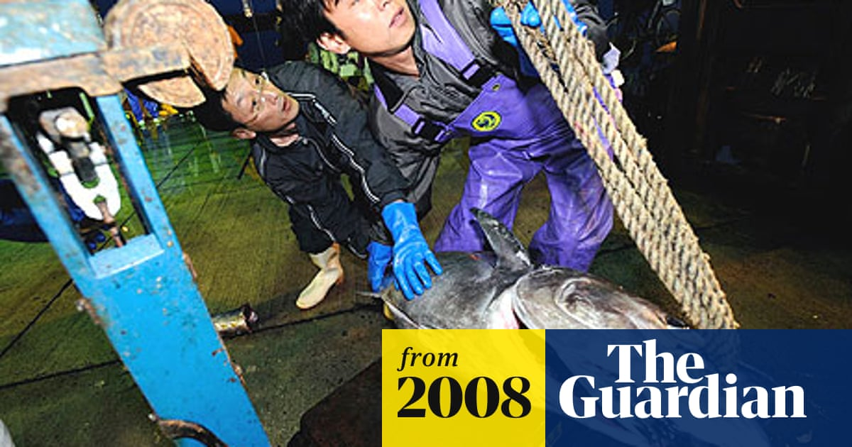 Still hooked: time runs out for Japan's dangerous obsession