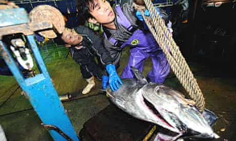 Japanese fishermen unload a 100kg Pacific bluefin tuna at the port of Oma in northern Japan