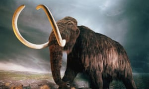A replica of a mammoth at the Royal British Columbia Museum in Victoria, Canada