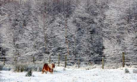 A Shetland pony in snow in Co Durham
