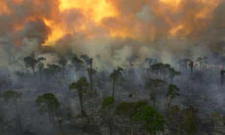 Burning rainforest