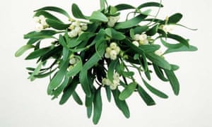 mistletoe bundle