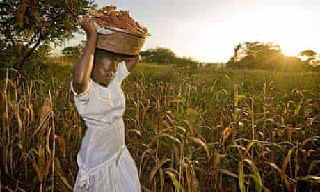 Loyce Ikeba harvests sorghum from a field in Katine