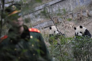 Gallery Panda peace offering: Panda People Liberty Army (PLA) soldier