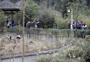 Gallery Panda peace offering: Taiwan press photographers