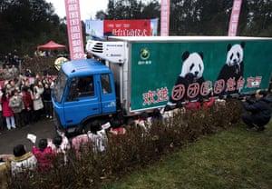 Gallery Panda peace offering: Workers wave as pandas