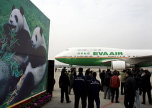Gallery Panda peace offering: Chengdu airport