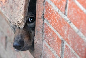 Gallery 24 hours in pictures: A dog looks out at the animal shelter in St Petersburg