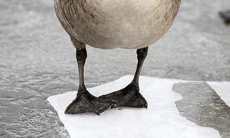 Canada Goose' official zero