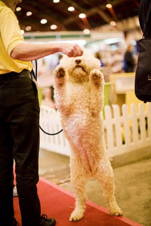Gallery Discover Dogs show: The Kennel Clubs' Discover Dogs dog show