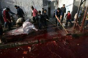 Gallery Eid al-Adha:  Palestinian men butcher a cow