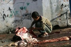 Gallery Eid al-Adha: Palestinian boy helps his father butcher a cow
