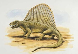 Artist's impression of a Dimetrodon